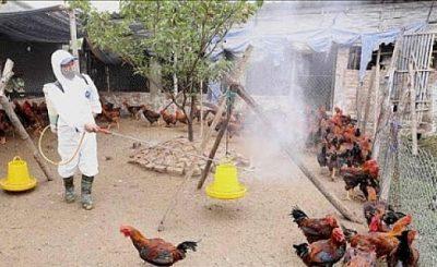 tổng vệ sinh môi trường phòng, chống dịch bệnh gia súc, gia cầm