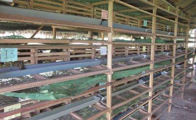 Hướng dẫn làm chuồng nuôi chim cút thịt và chim cút sinh sản
